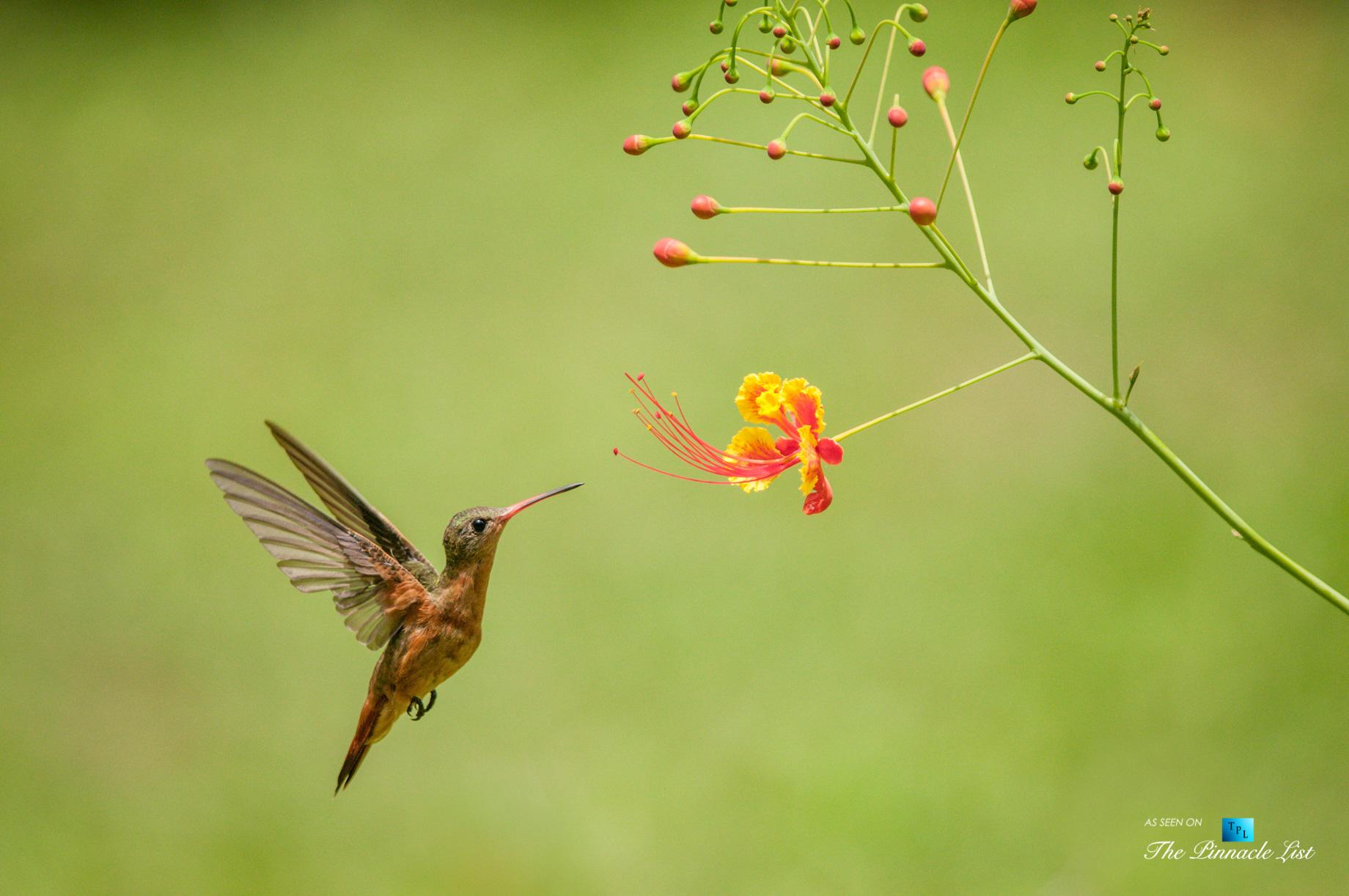 Tambor Tropical Beach Resort – Tambor, Puntarenas, Costa Rica – Tropical Hummingbird