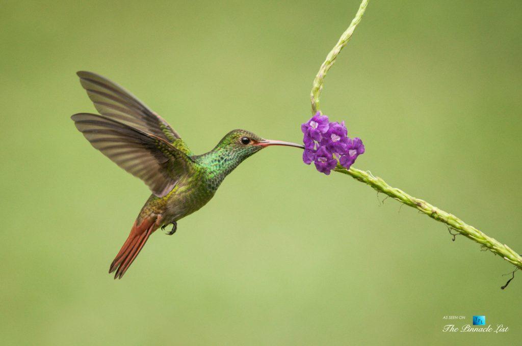 Tambor Tropical Beach Resort - Tambor, Puntarenas, Costa Rica - Tropical Hummingbird