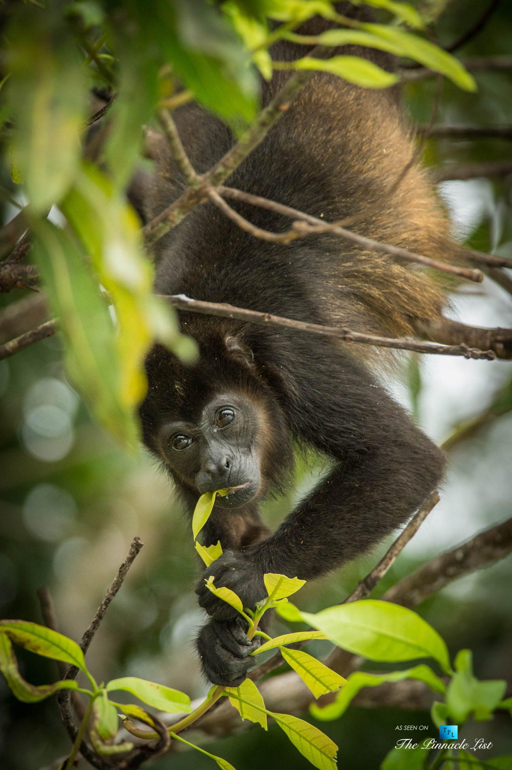 Tambor Tropical Beach Resort – Tambor, Puntarenas, Costa Rica – Tropical Monkey