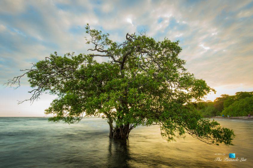 Tambor Tropical Beach Resort - Tambor, Puntarenas, Costa Rica - Surreal Tropical Tree in Ocean