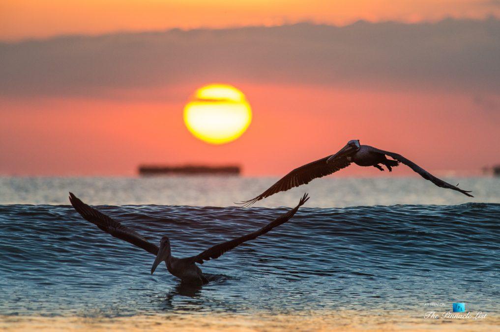 Tambor Tropical Beach Resort - Tambor, Puntarenas, Costa Rica - Tropical Ocean Sunset Birds