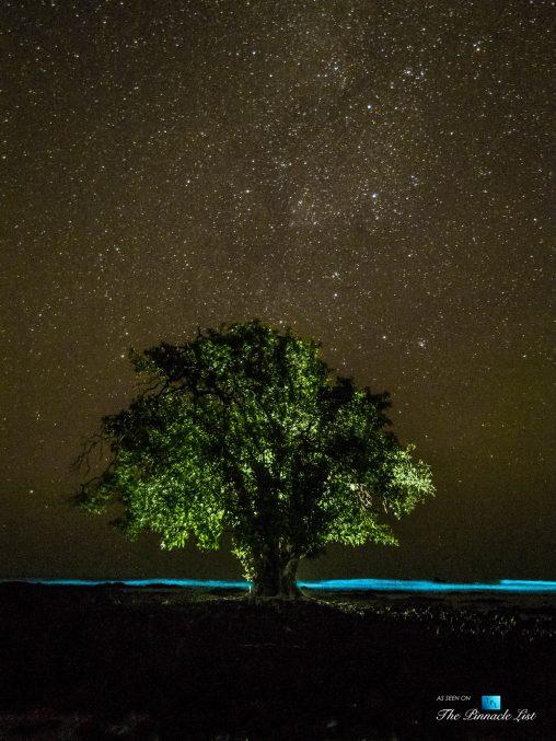 Tambor Tropical Beach Resort - Tambor, Puntarenas, Costa Rica - Surreal Night View of Tropical Tree Under Stars