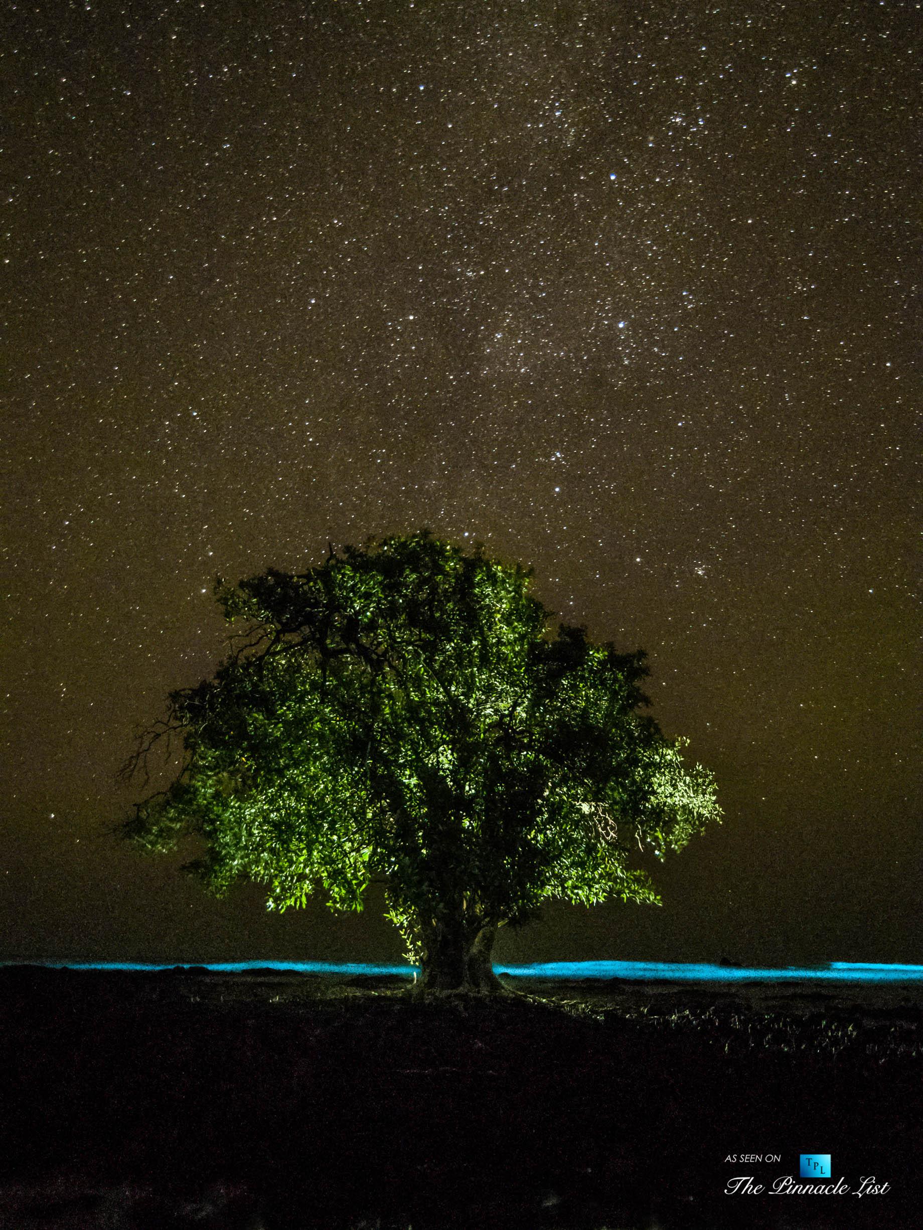 Tambor Tropical Beach Resort – Tambor, Puntarenas, Costa Rica – Surreal Night View of Tropical Tree Under Stars