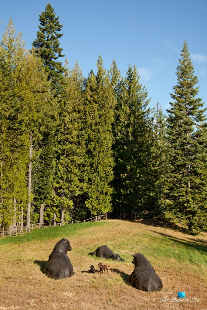 Outdoors and Outbuildings - Thunder Ranch - 7095 Bottle Bay Rd, Sagle, ID, USA
