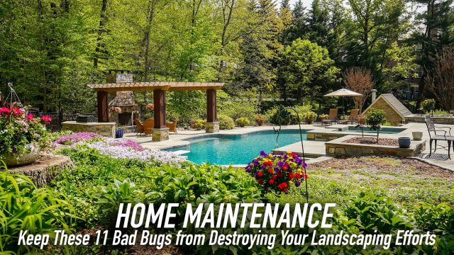 Home Maintenance - Keep These 11 Bad Bugs from Destroying Your Landscaping Efforts