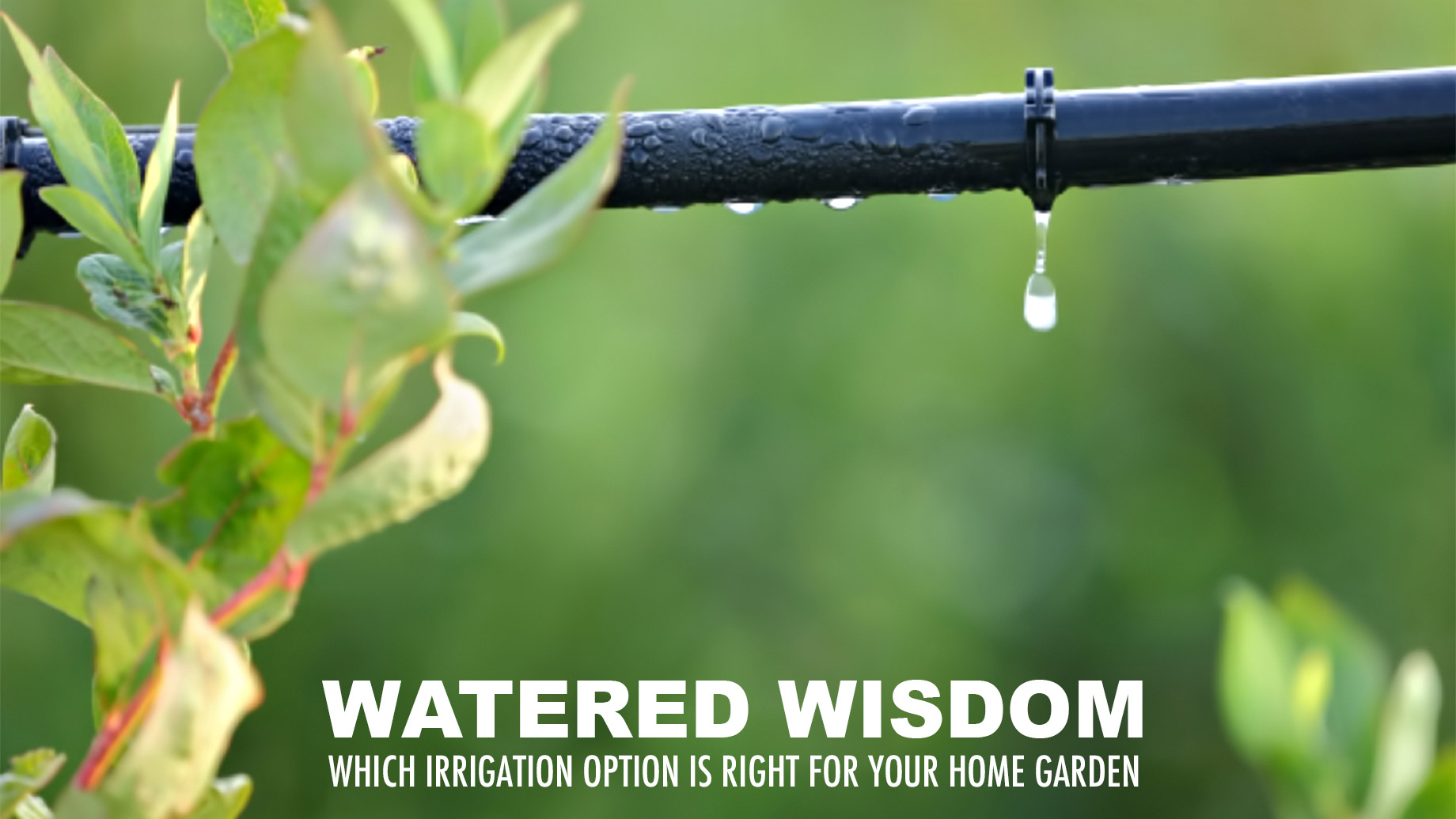Watered Wisdom - Which Irrigation Option is Right For Your Home Garden?
