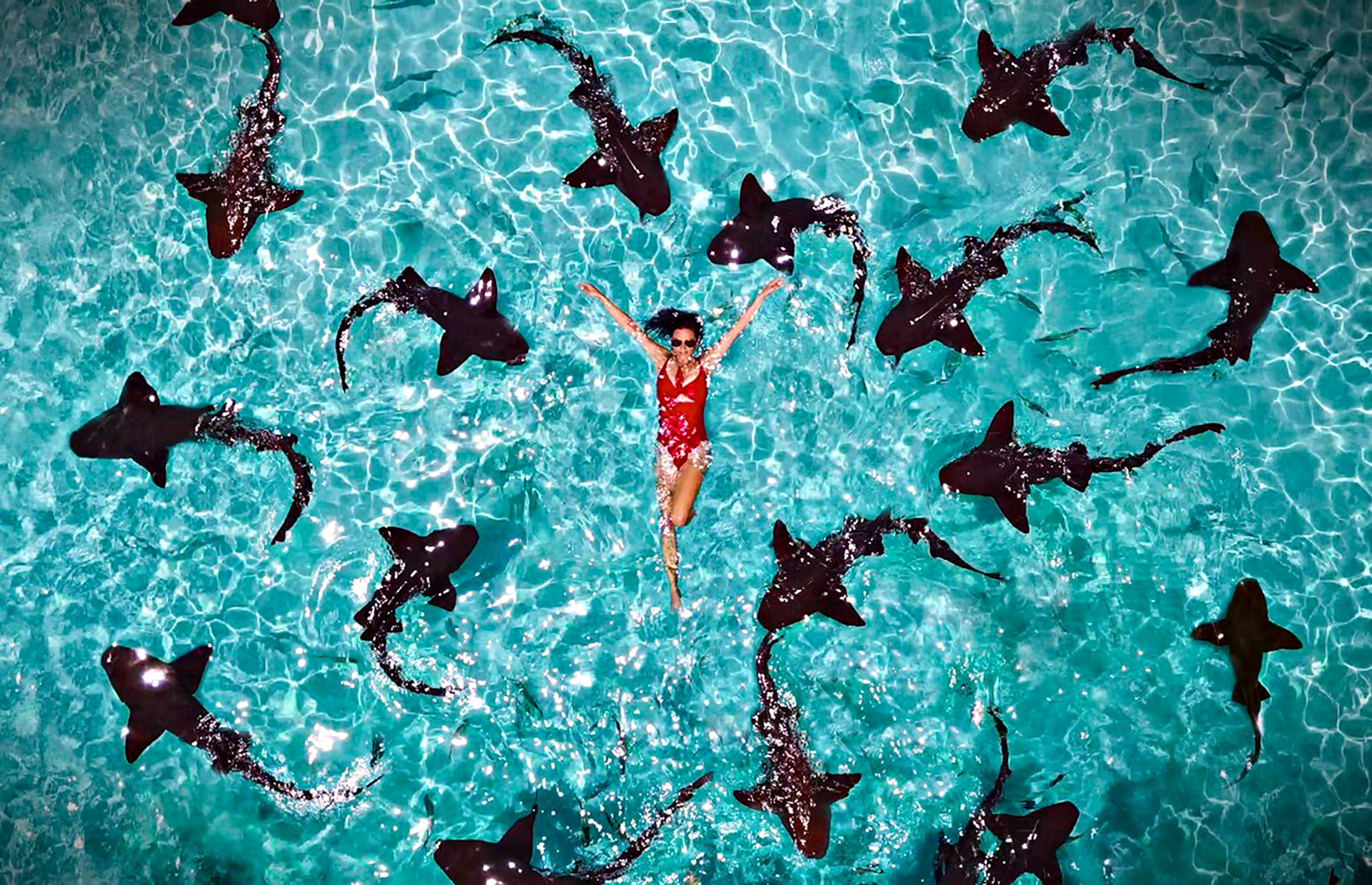 Swim with Sharks at Compass Cay - Take A Luxury Getaway To The Bahamas