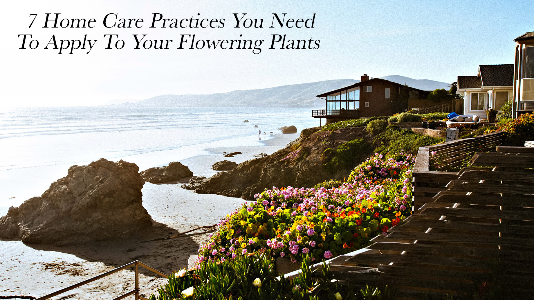 7 Home Care Practices You Need To Apply To Your Flowering Plants