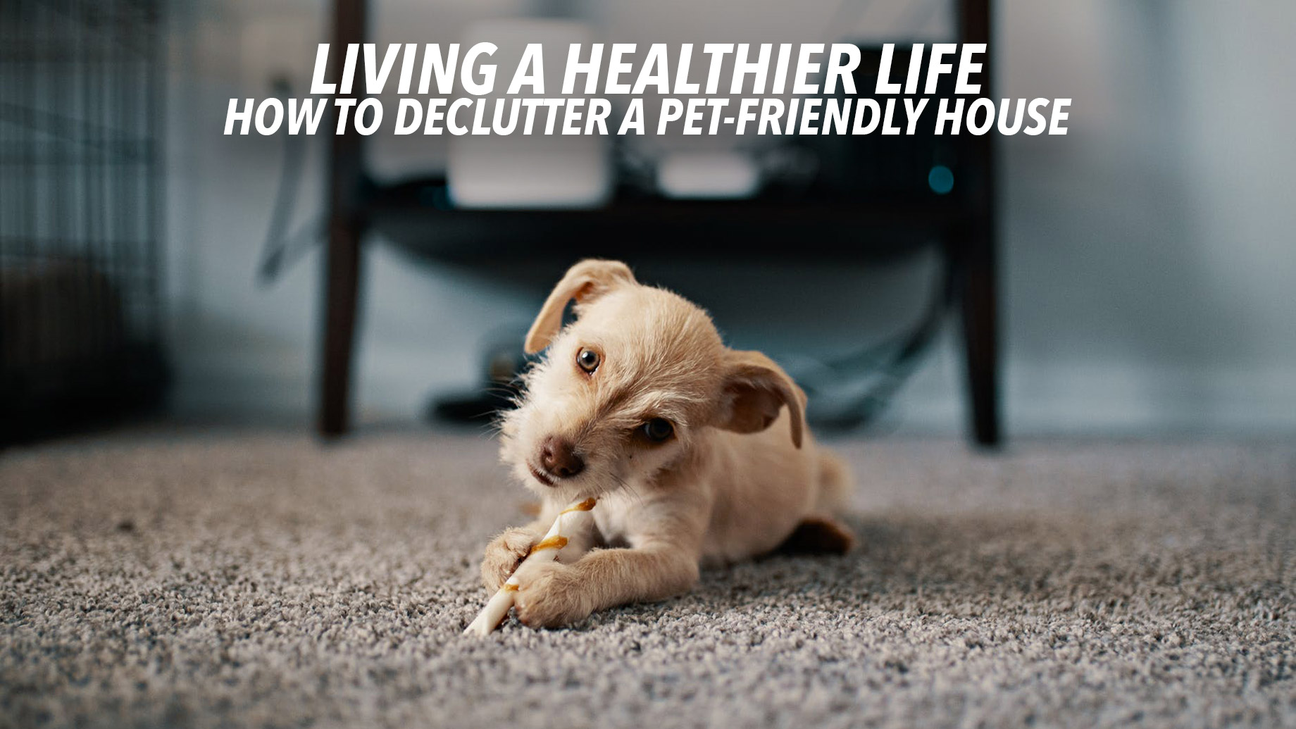 Living A Healthier Life - How To Declutter A Pet-Friendly House