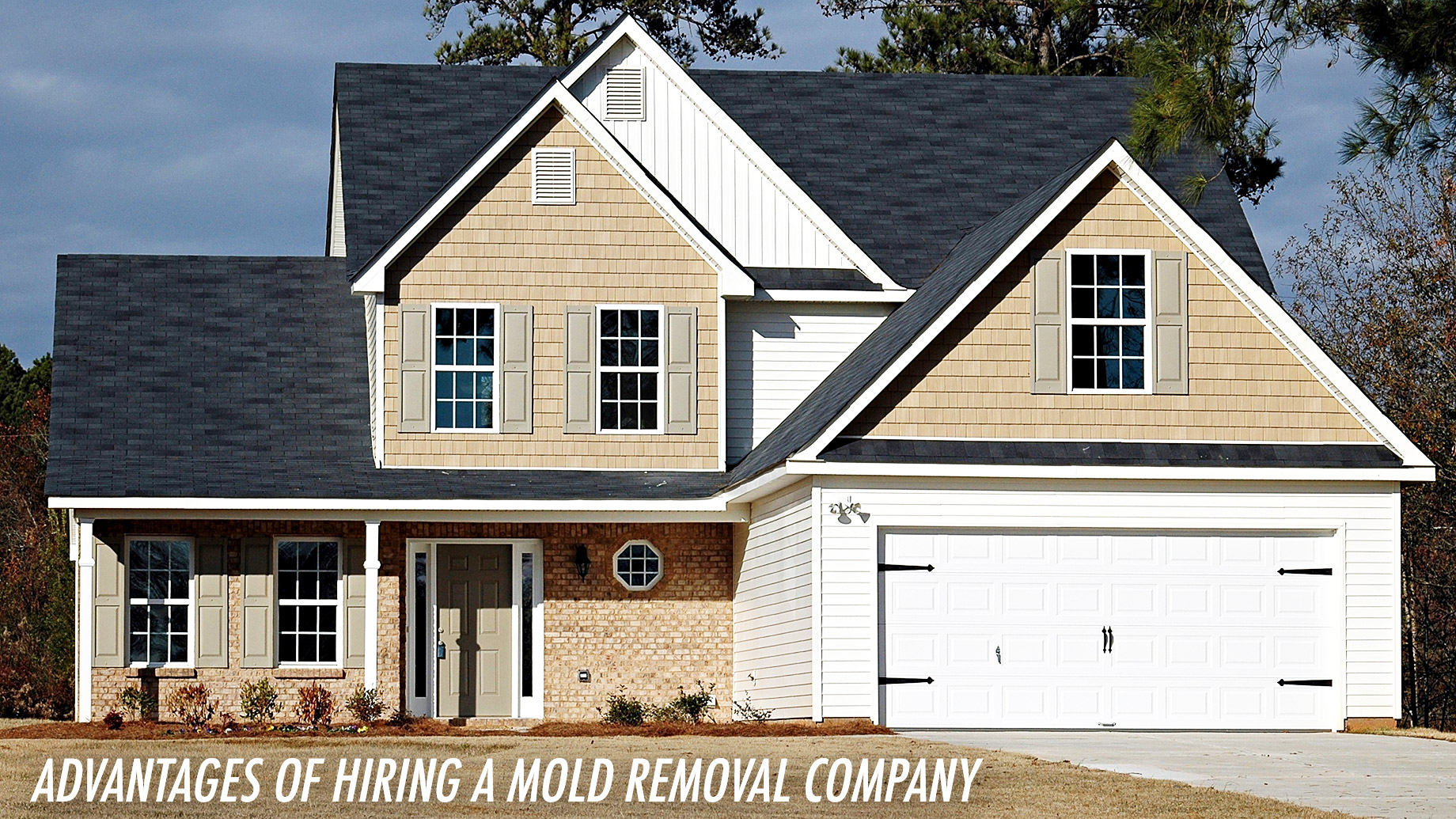 Home Maintenance - Advantages Of Hiring A Mold Removal Company