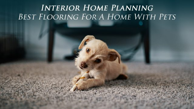 Interior Home Planning - Best Flooring For A Home With Pets