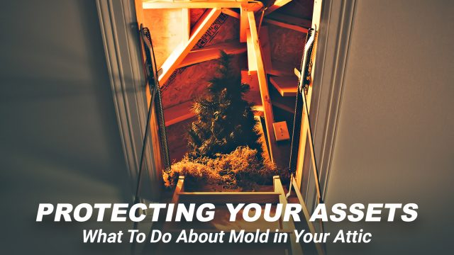 Protecting Your Assets - What To Do About Mold in Your Attic