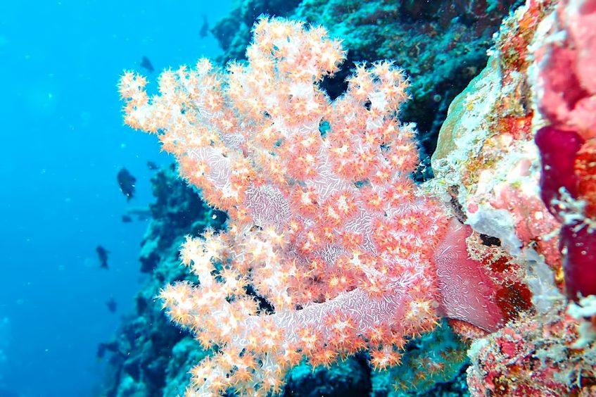 The Nautilus Maldives Luxury Resort - Thiladhoo Island, Maldives - Ocean Reef