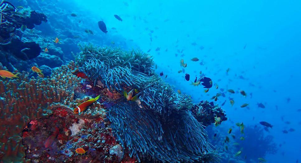 The Nautilus Maldives Luxury Resort - Thiladhoo Island, Maldives - Ocean Reef Fish