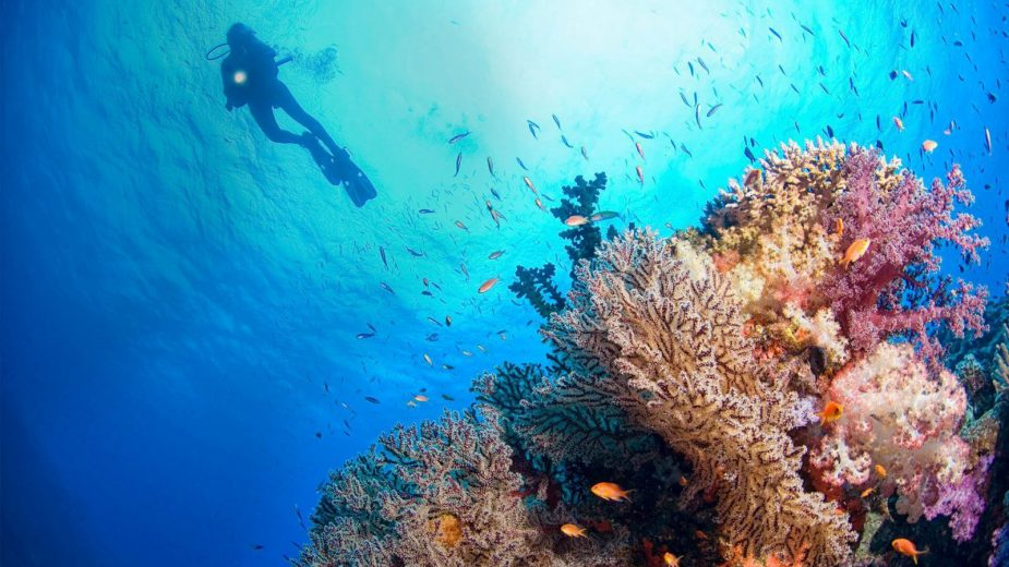Joali Maldives Luxury Resort - Muravandhoo Island, Maldives - Scuba Diving