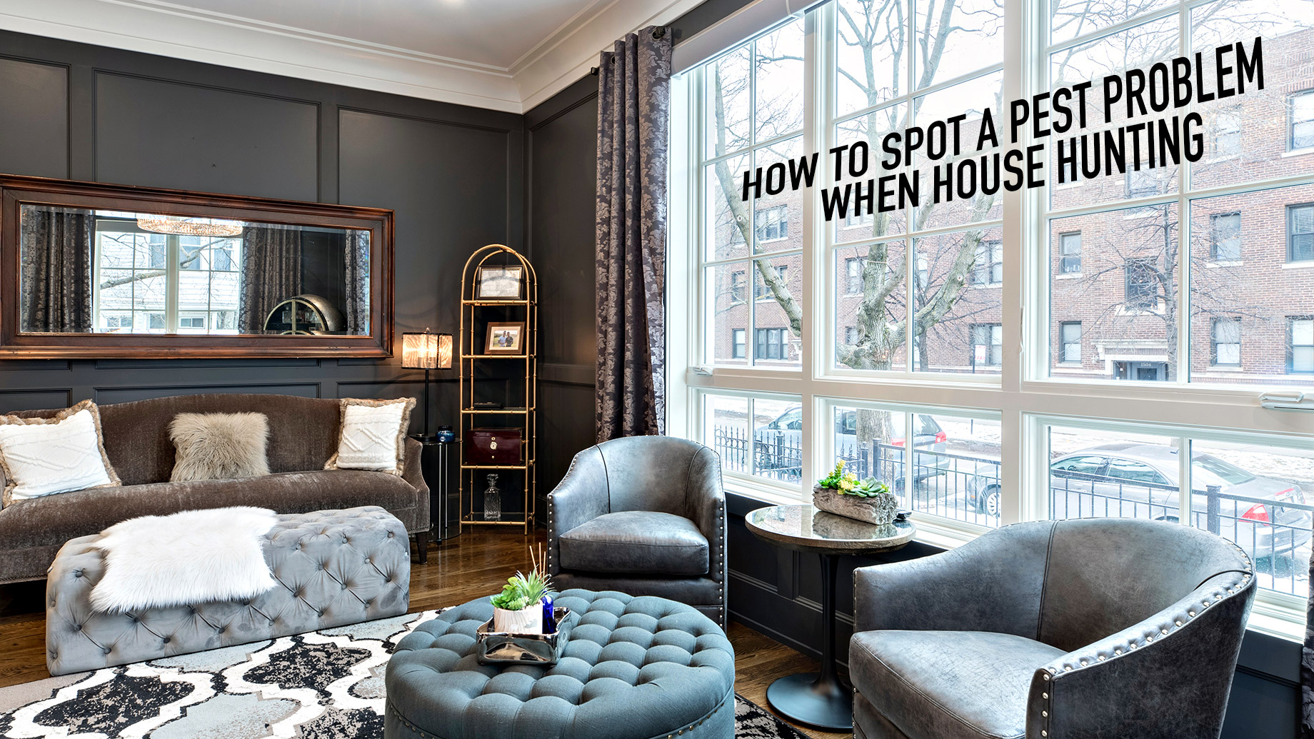 How To Spot A Pest Problem When House Hunting
