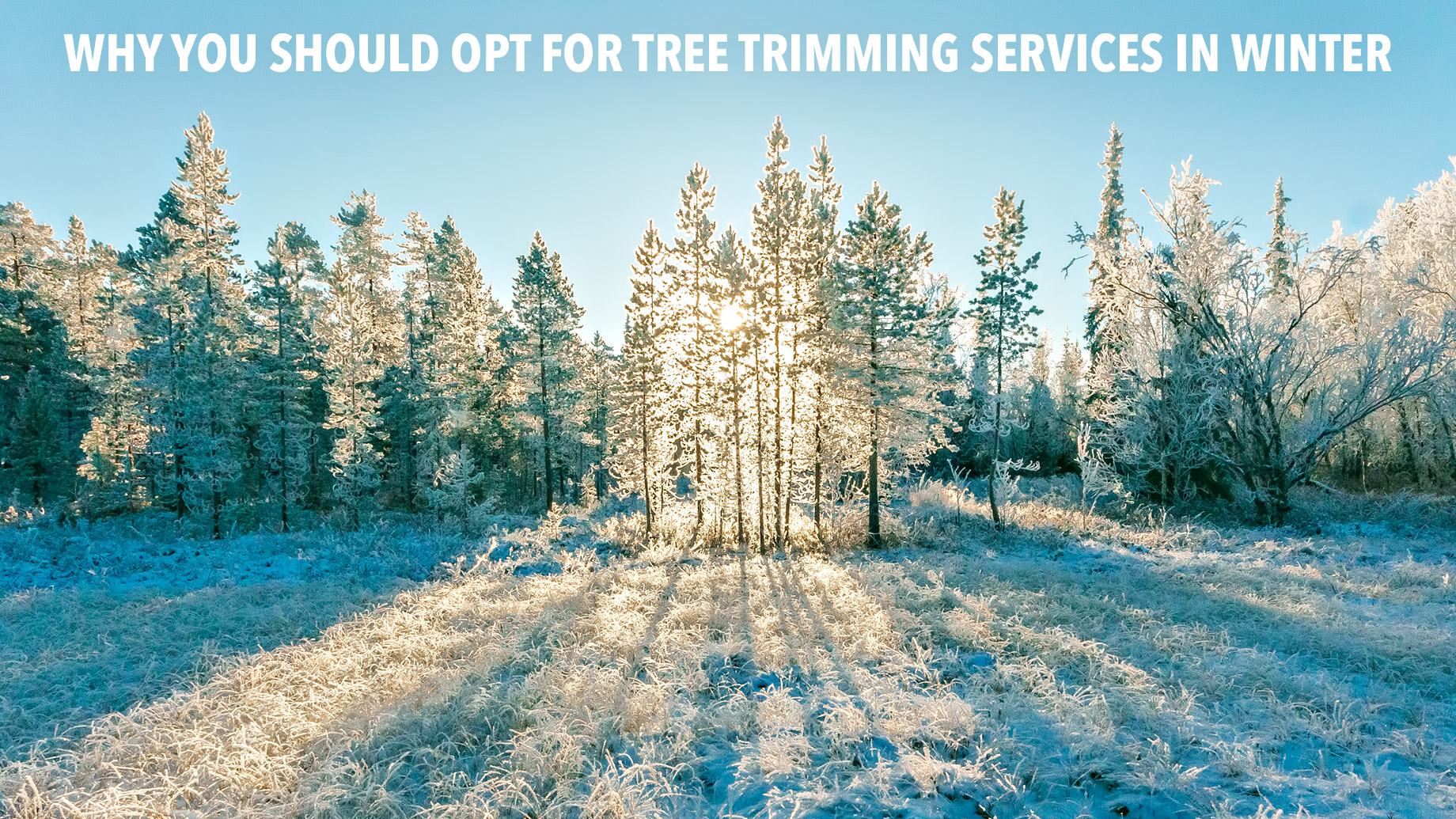 Why You Should Opt for Tree Trimming Services in Winter