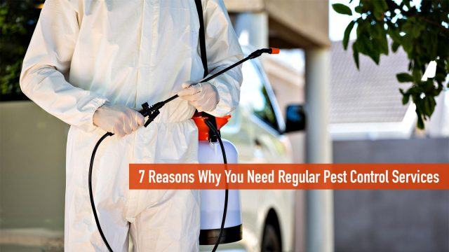 7 Reasons Why You Need Regular Pest Control Services