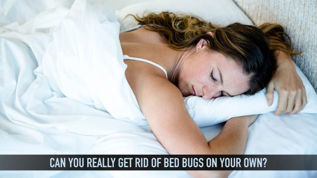 Pest Problems - Can You Really Get Rid of Bed Bugs on Your Own?