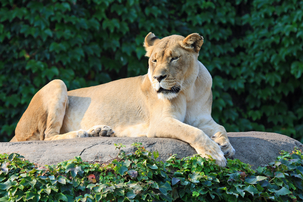 Lincoln Park Zoo – Chicago, Illinois