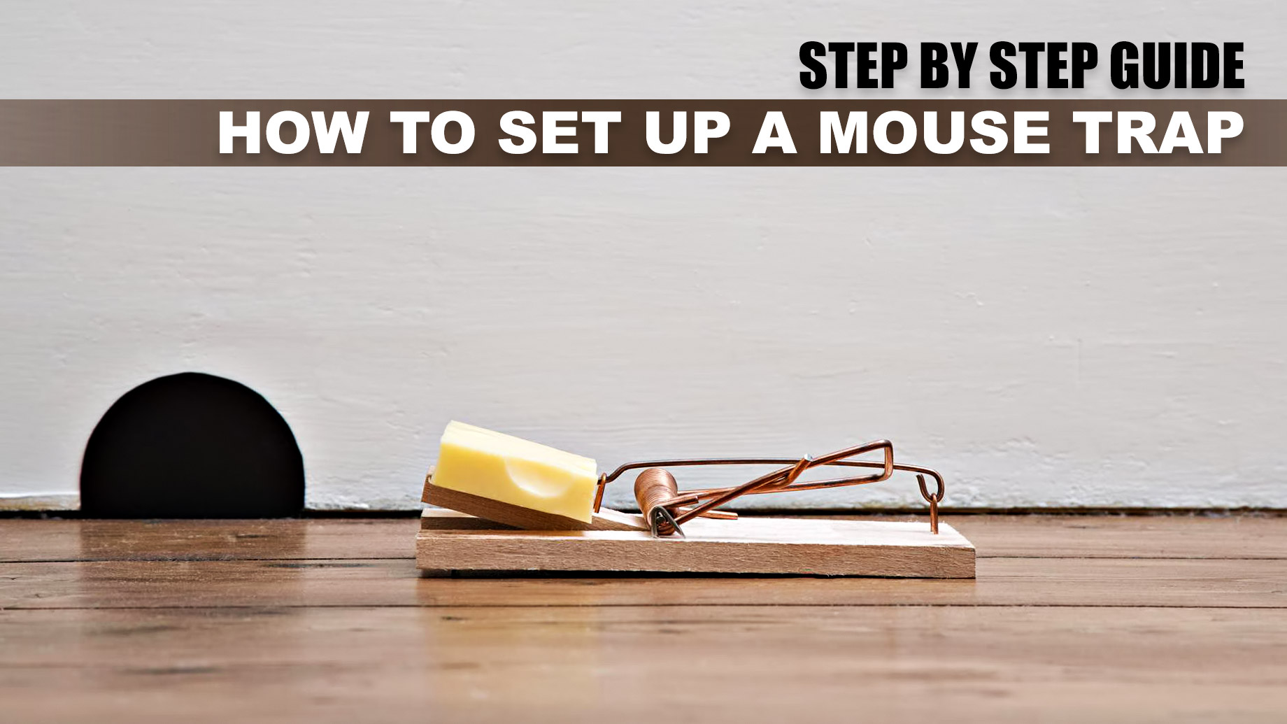 Step by Step Guide on How to Set Up a Mouse Trap