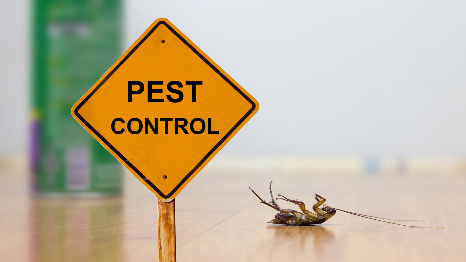 5 Creative and Natural Pest Control Methods You've Never Thought Of