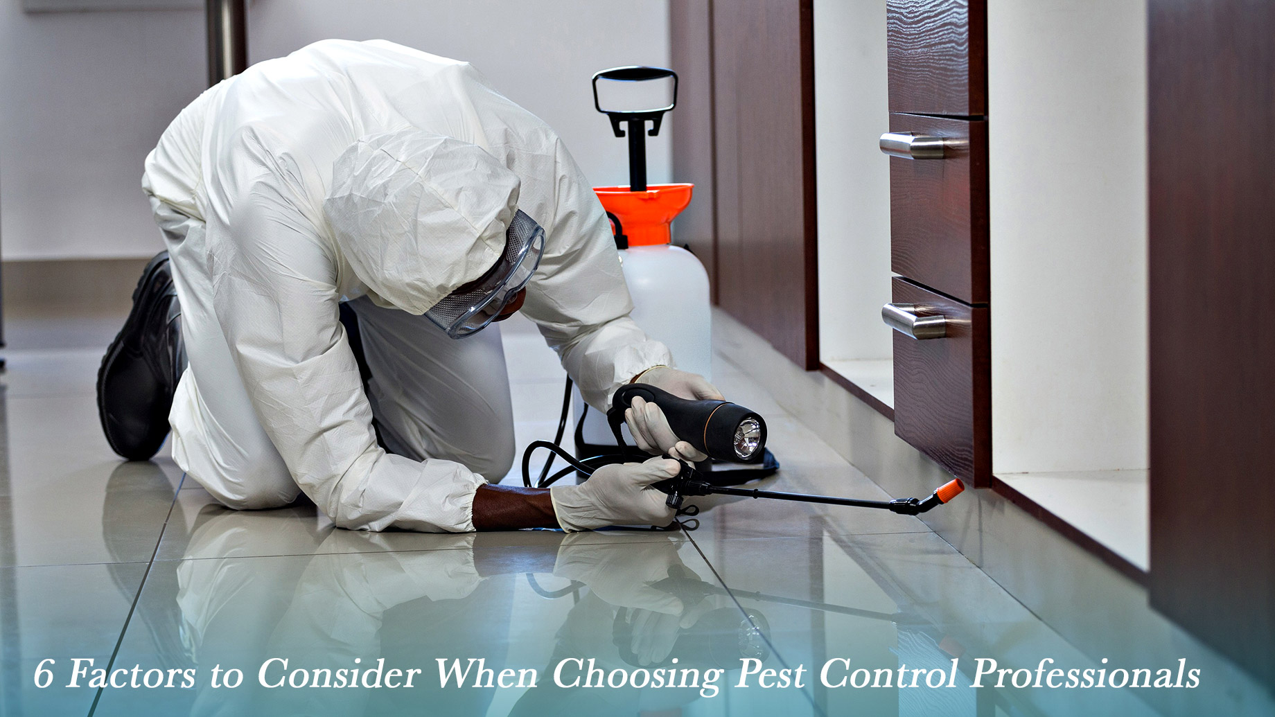 6 Factors to Consider When Choosing Pest Control Professionals