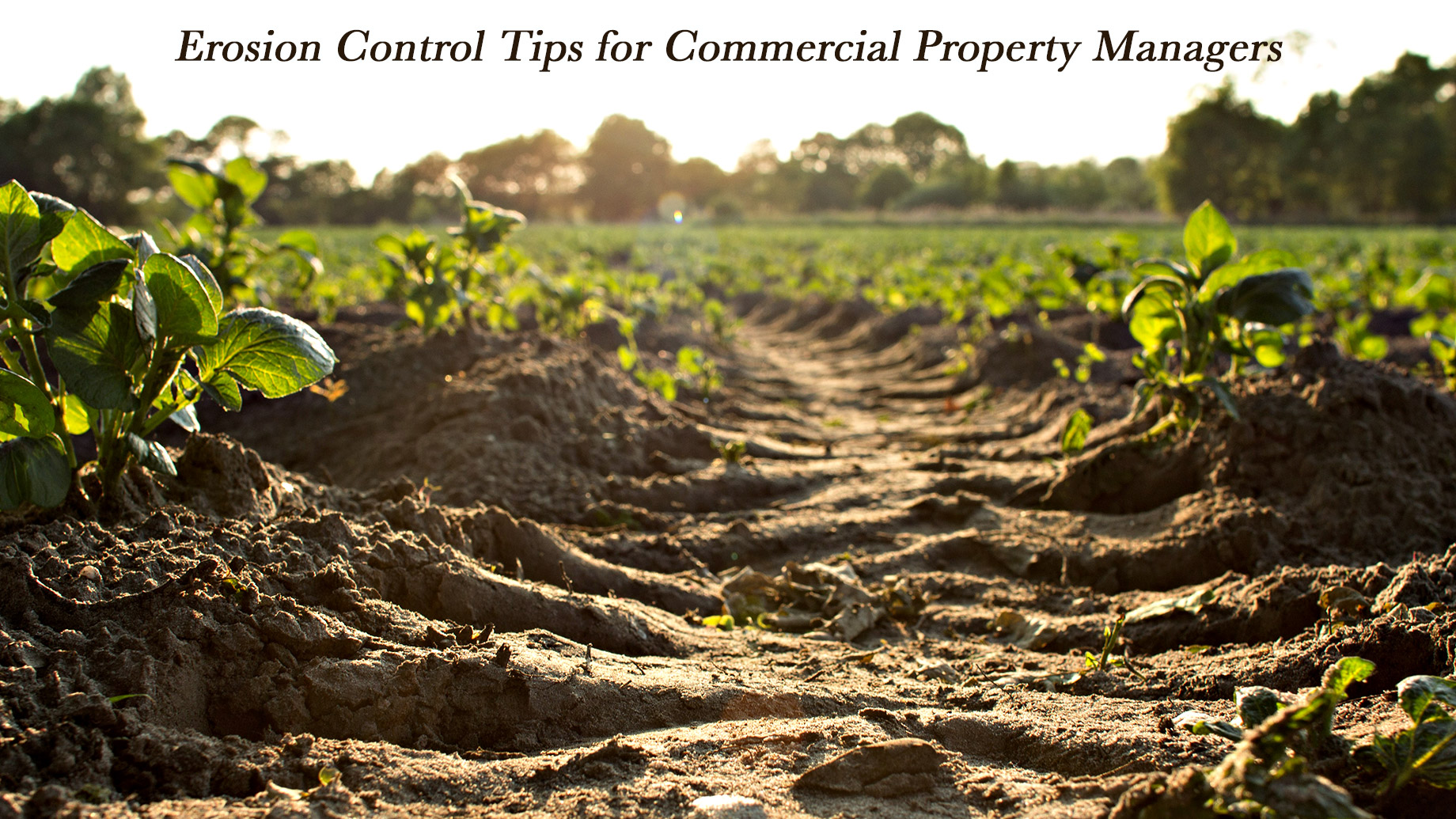 Erosion Control Tips for Commercial Property Managers