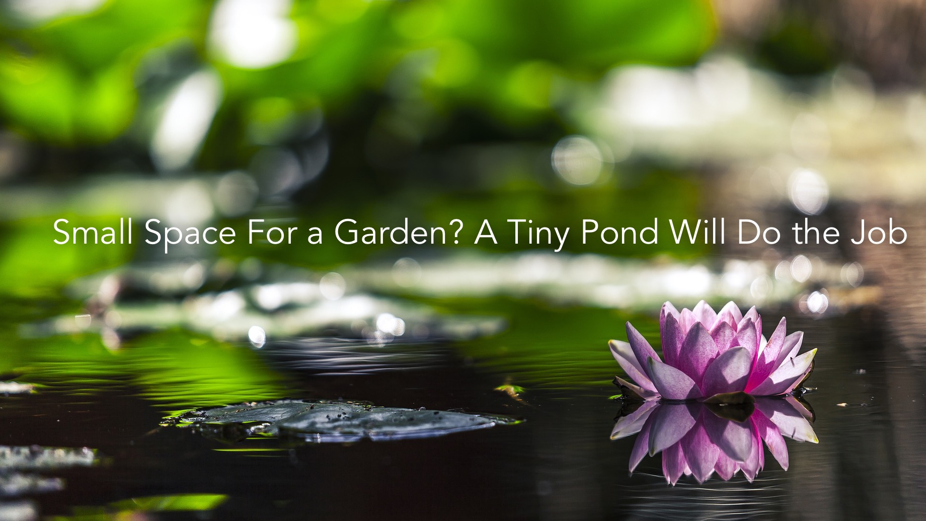 Small Space For a Garden? A Tiny Pond Will Do the Job