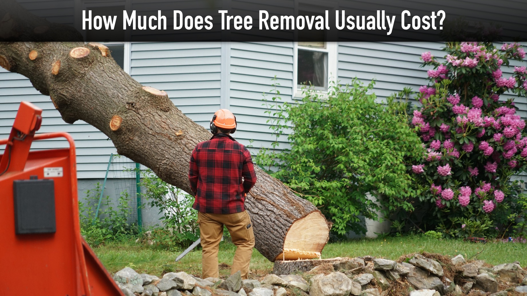 How Much Does Tree Removal Usually Cost?