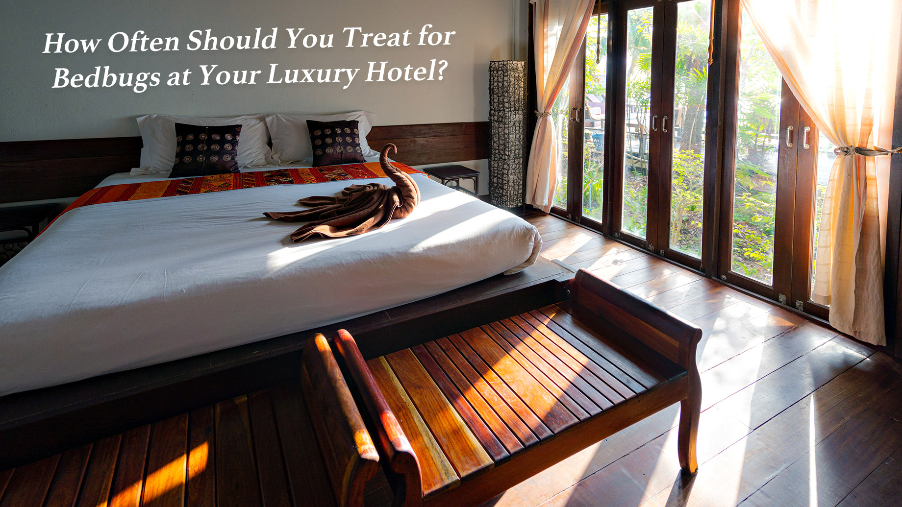 How Often Should You Treat for Bedbugs at Your Luxury Hotel?