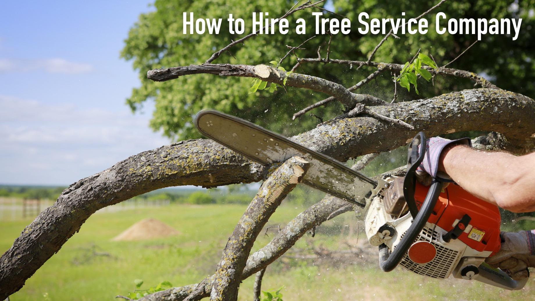 How to Hire a Tree Service Company