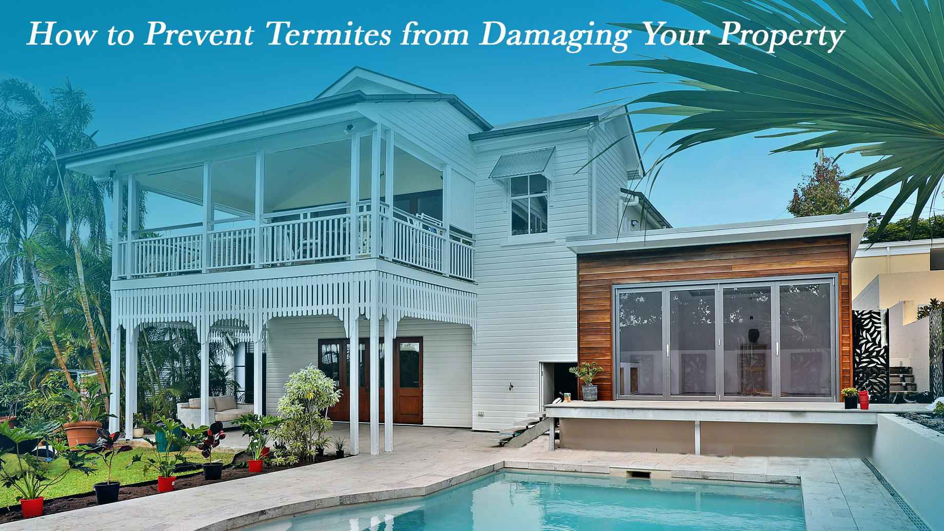 How to Prevent Termites from Damaging Your Property