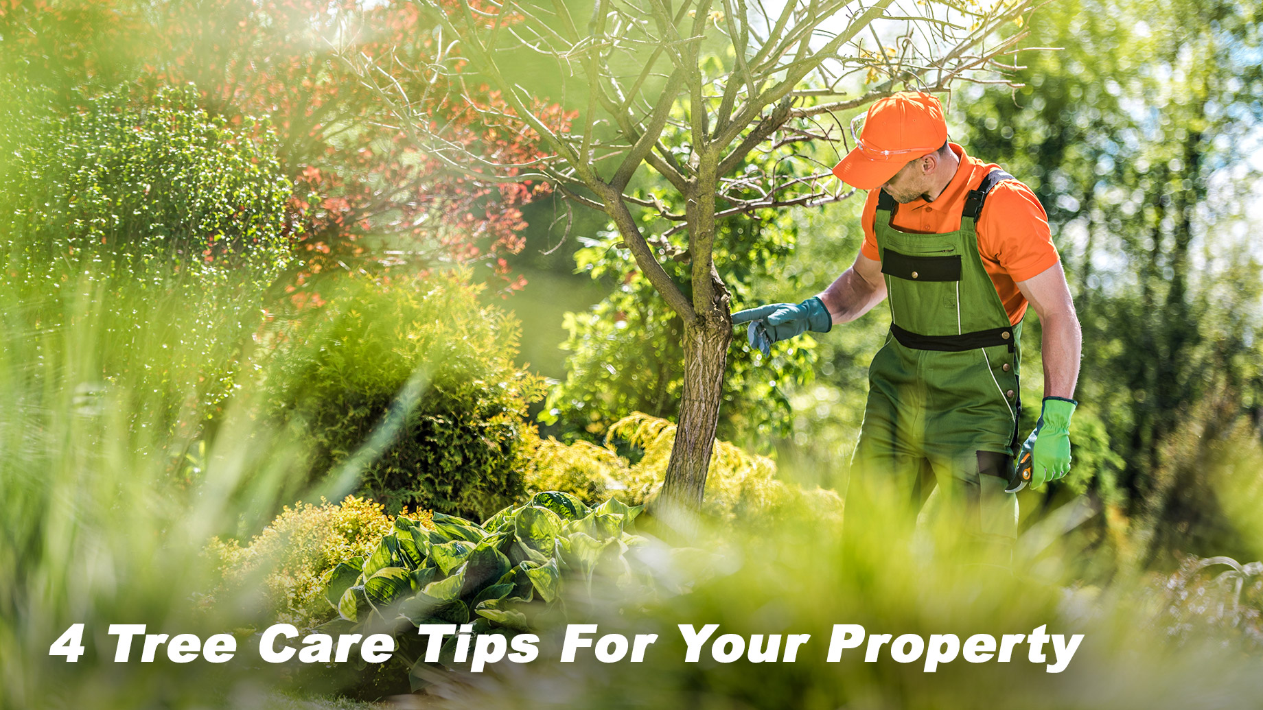 4 Tree Care Tips For Your Property