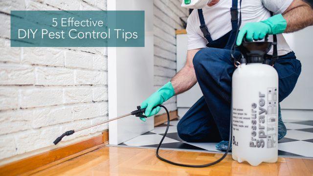 5 Effective DIY Pest Control Tips