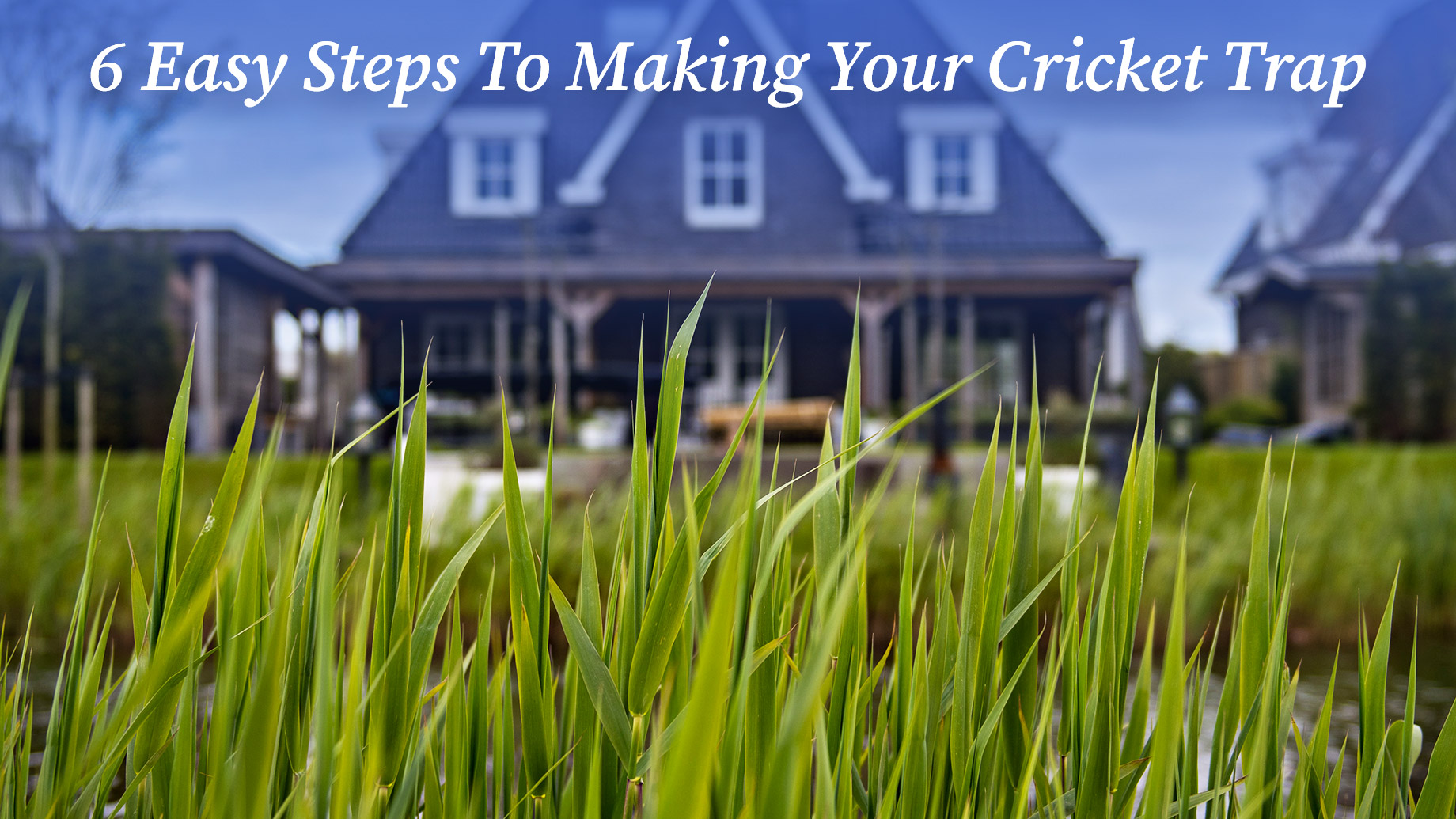 6 Easy Steps To Making Your Cricket Trap