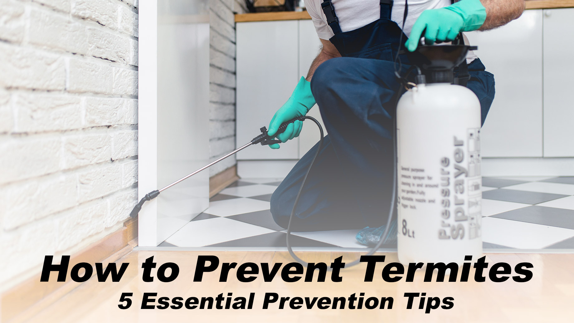 How to Prevent Termites - 5 Essential Prevention Tips