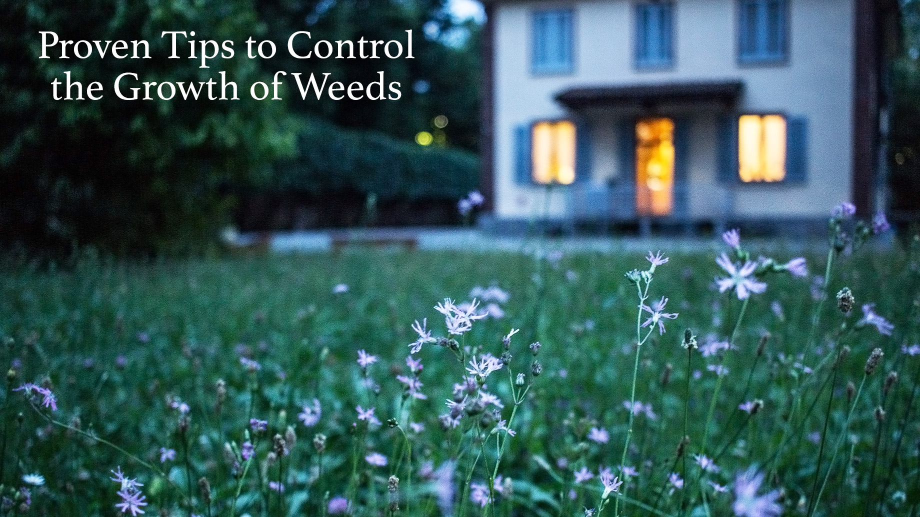 Proven Tips to Control the Growth of Weeds