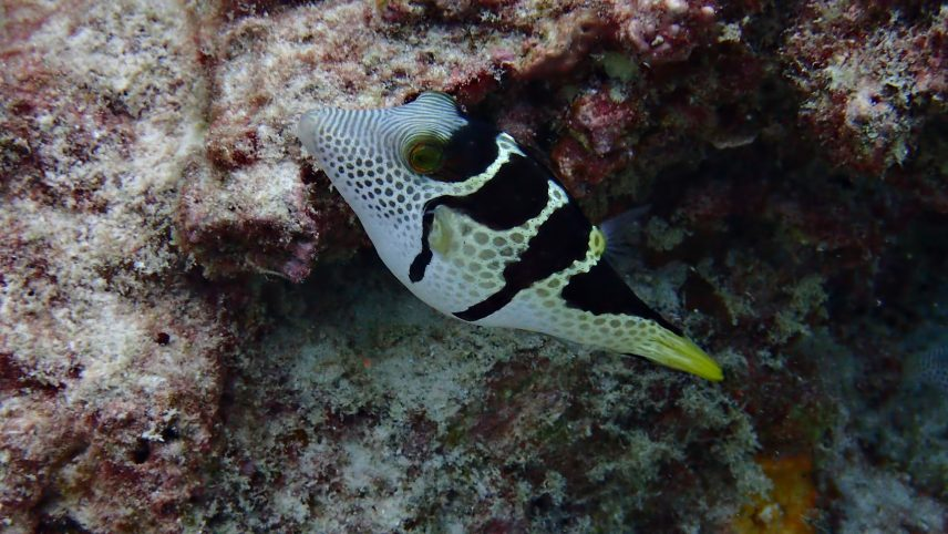 Six Senses Zil Pasyon Luxury Resort - Felicite Island, Seychelles - Tropical Fish
