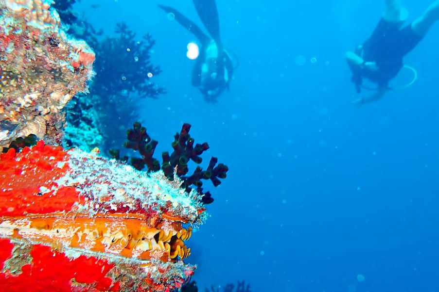 The Nautilus Maldives Luxury Resort - Thiladhoo Island, Maldives - Scuba Diving