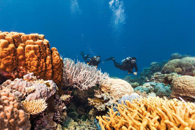 InterContinental Hayman Island Resort - Whitsunday Islands, Australia - Scuba Diving