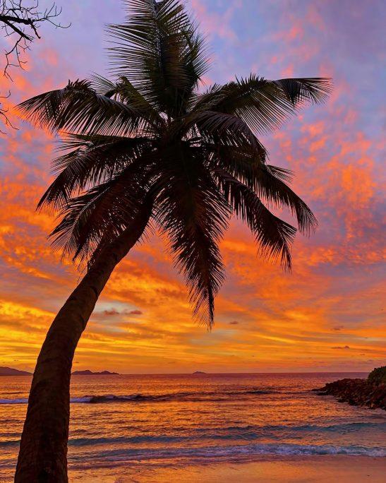 Six Senses Zil Pasyon Luxury Resort - Felicite Island, Seychelles - Tropical Island Palm Tree Sunset