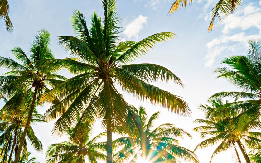 One&Only Reethi Rah Luxury Resort - North Male Atoll, Maldives - Palm Trees