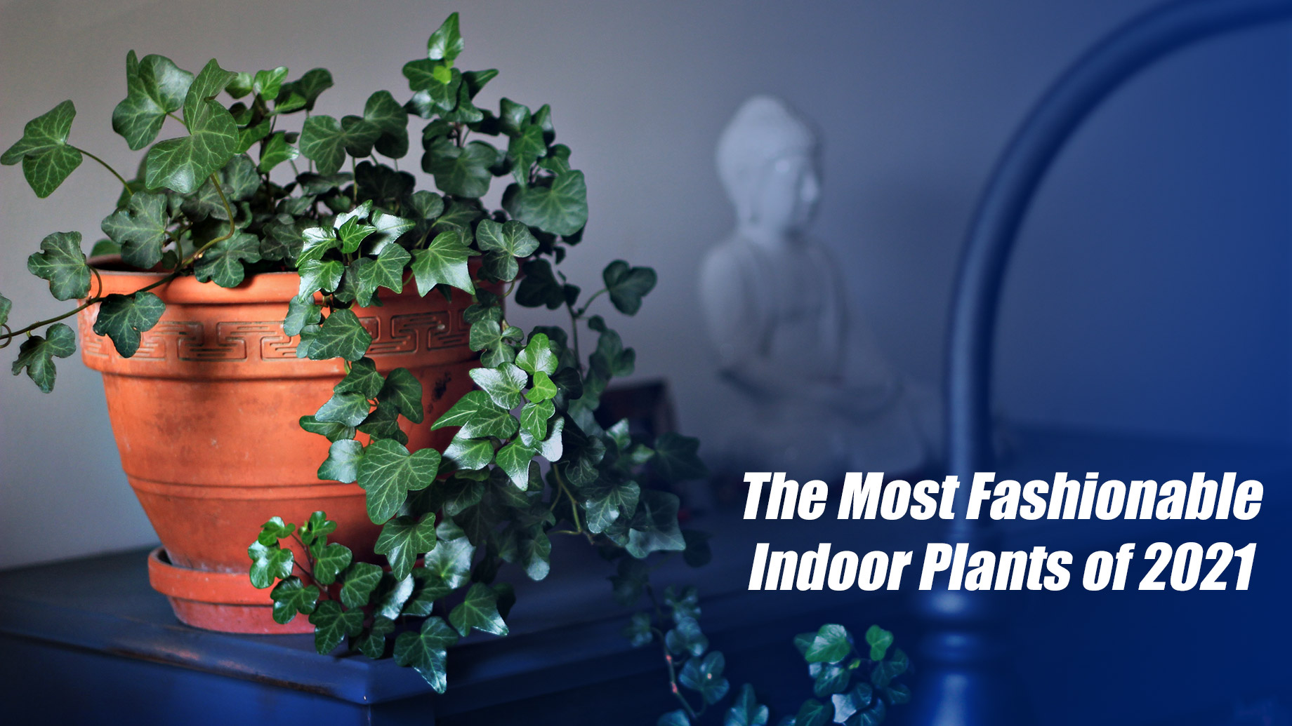 The Most Fashionable Indoor Plants of 2021