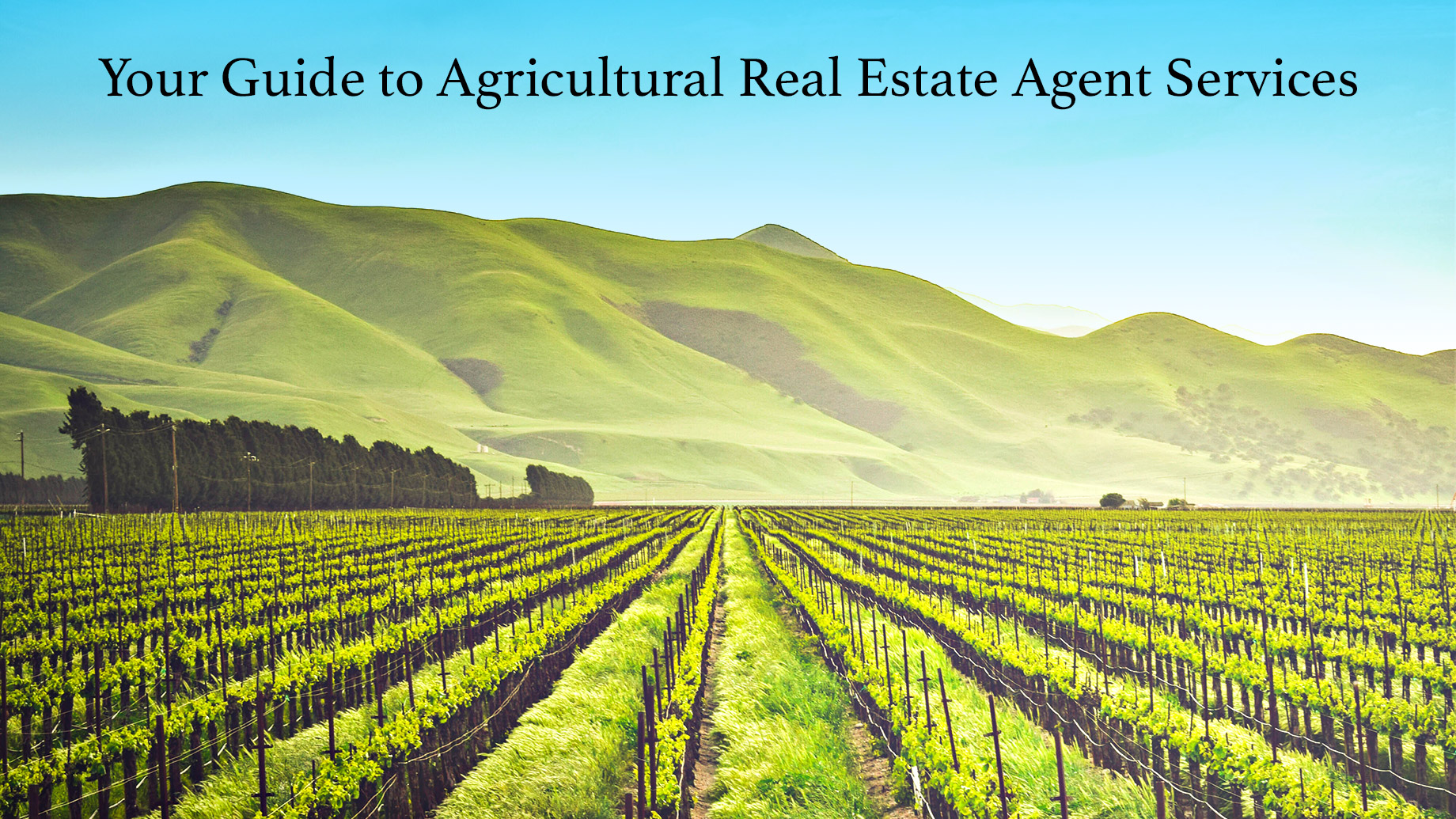 Your Guide to Agricultural Real Estate Agent Services
