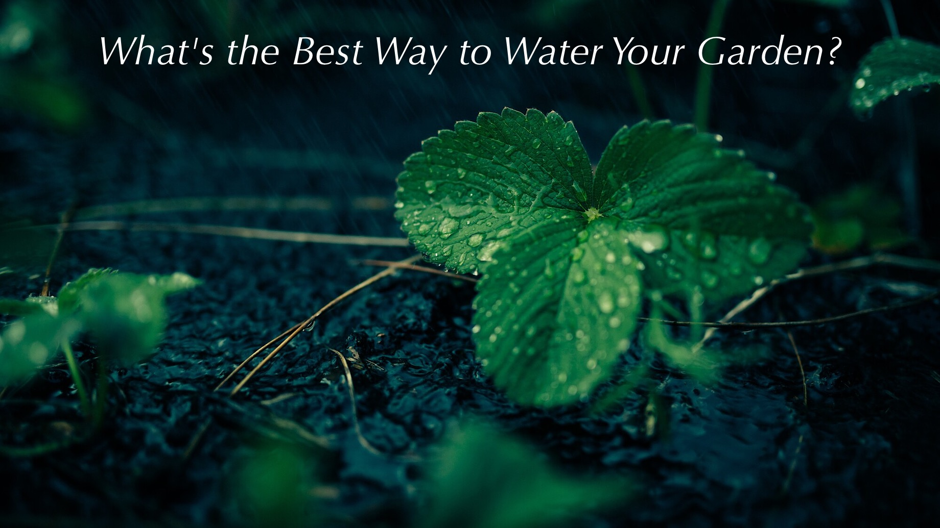 Fighting the Summer Heat - What's the Best Way to Water Your Garden?