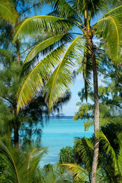 The Brando Luxury Resort - Tetiaroa Private Island, French Polynesia - Palm Tree Leaves