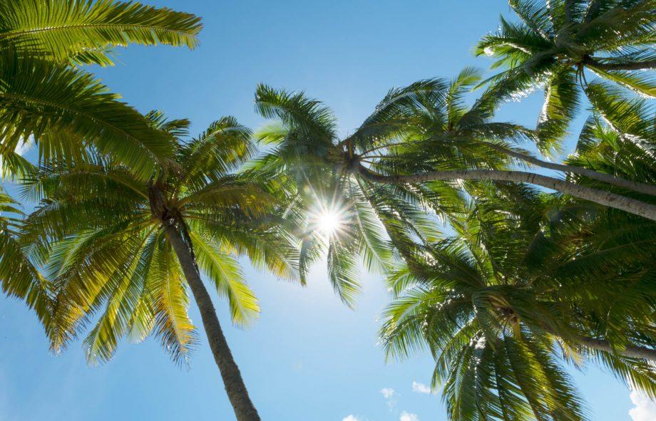 The Brando Luxury Resort - Tetiaroa Private Island, French Polynesia - Palm Tree