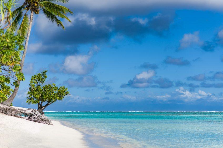The Brando Luxury Resort - Tetiaroa Private Island, French Polynesia - Beachfront Tropical Tree