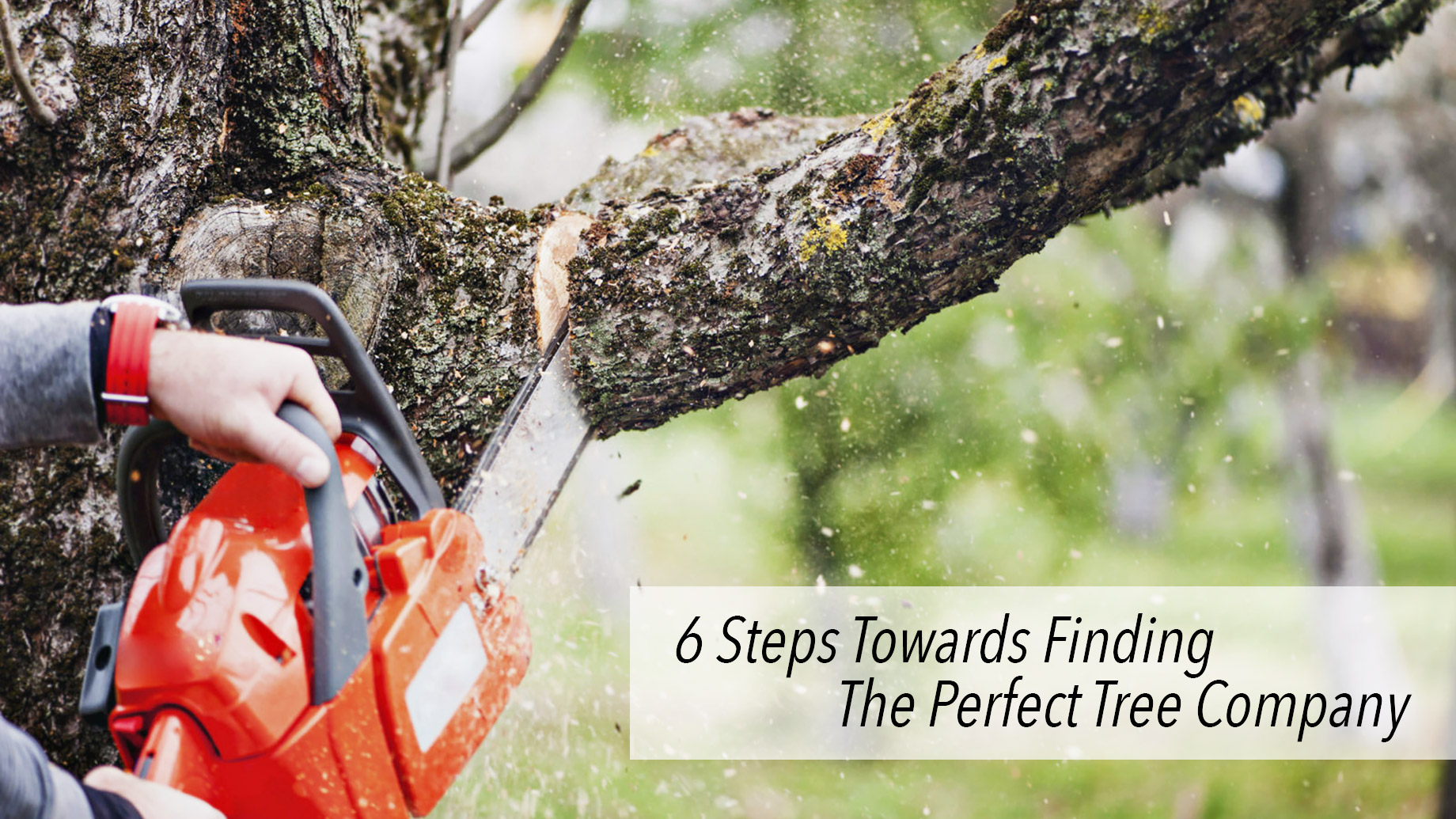6 Steps Towards Finding The Perfect Tree Company